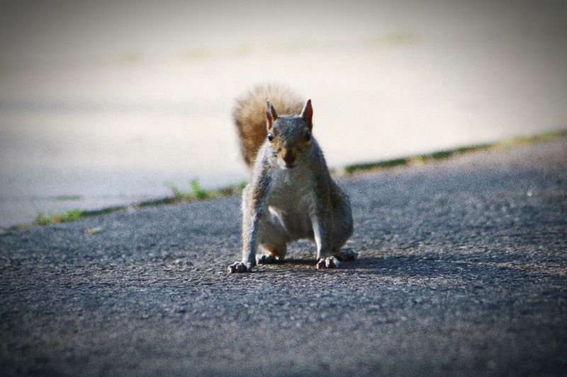 Posing For Park Wildlife Animal Photography Squirrel posing for me in the park.