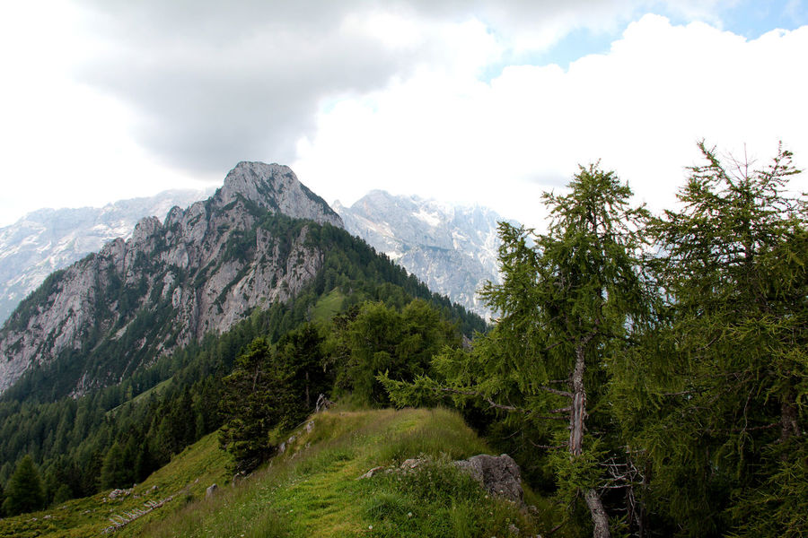 Beauty In Nature Cloud - Sky Day Forest Green Color Krofička Landscape Logarska Dolina Mountain Nature No People Outdoors Sky Tranquil Scene Tranquility Tree