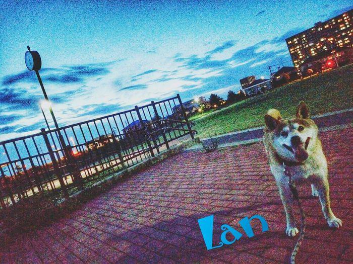 family🐶sibainu🌠Lan Pets Dog Sea Water Sky Dog Lead