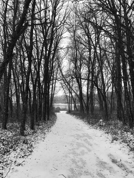 Black And White Friday Tree Nature Winter Tranquility Bare Tree The Way Forward Beauty In Nature Snow Landscape Scenics Cold Temperature Tranquil Scene Outdoors No People Forest Day Branch