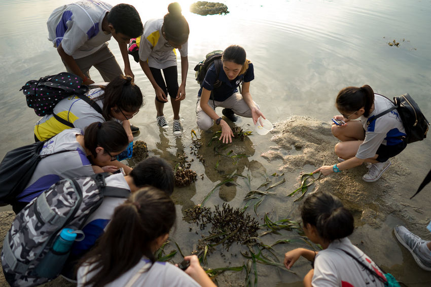 A Study of the Intertidal Ecosystem of Pulau Hantu, Singapore Ecosystem  Education Field Truo Intertidal Mixed Age Range Nature Outdoor Outdoors Pulau Pinang Science Science Fiction Singapore Water