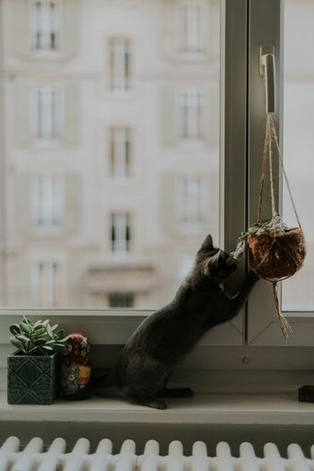 Nara ♥️ Animal Themes One Animal Domestic Cat Window Pets Domestic Animals Window Sill Cat Feline Indoors  Close-up Tranquil Scene EyeEm Gallery The Week On EyeEm Eyeem Market