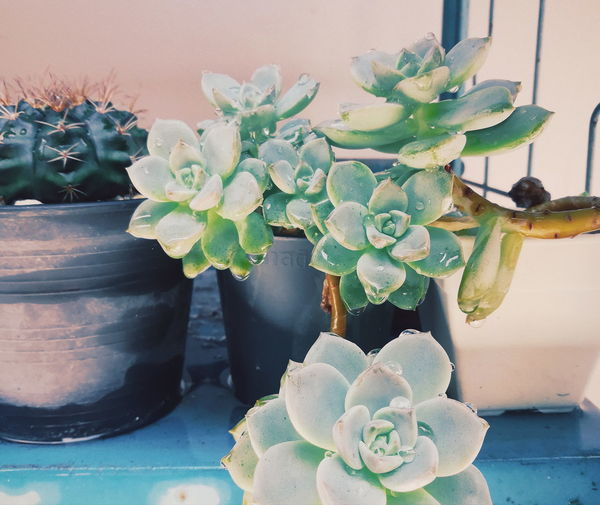 Close-up of succulent plant in vase on table