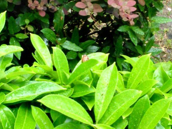Suicide snail ? Escargot Snail Nature's Diversities Beauty In Nature Green Rainy Day Wet Verde Vert Verdure Jour De Pluie
