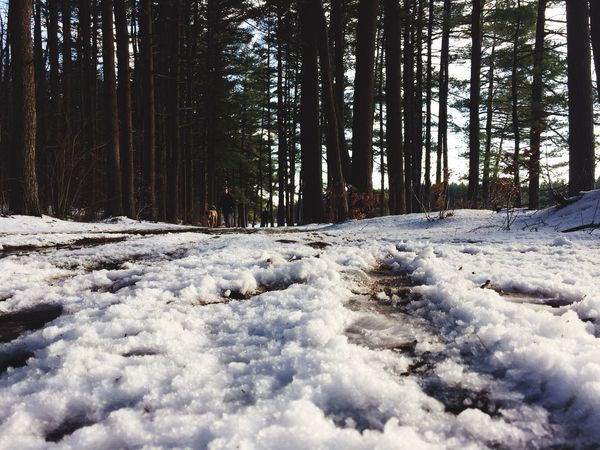 Snow Low Angle View Winter Dog Dogs Outdoors Hiking Walking Walking Dog Mud Footprints Ground Ground Level View Shootermag People In Nature Nature
