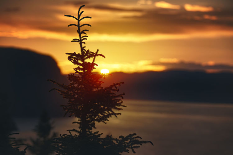 The Tree Quebec Sunset_collection Beauty In Nature Close-up Day Nature No People Orange Color Outdoors Scenics Silhouette Sky Sunset Tranquil Scene Tranquility Tree