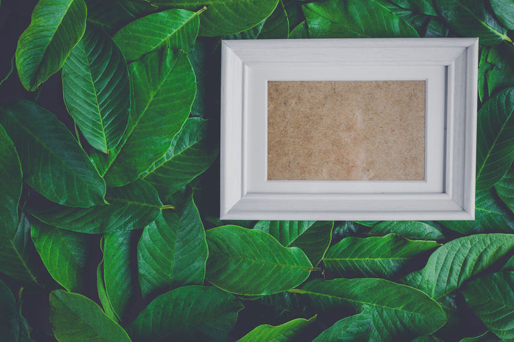 Directly above shot of blank picture frame amidst green leaves