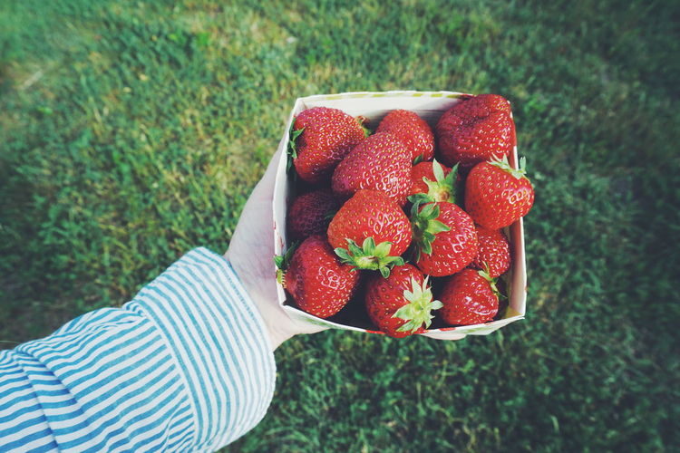 hand holding strawberries Red Strawberry Fruit One Person Human Body Part People Healthy Eating Outdoors Day Holding Grass Freshness Growth Close-up Only Women Adult Human Hand Adults Only Agriculture Nature Strawberries Strawberry Love Hand Summer Fresh On Market 2017