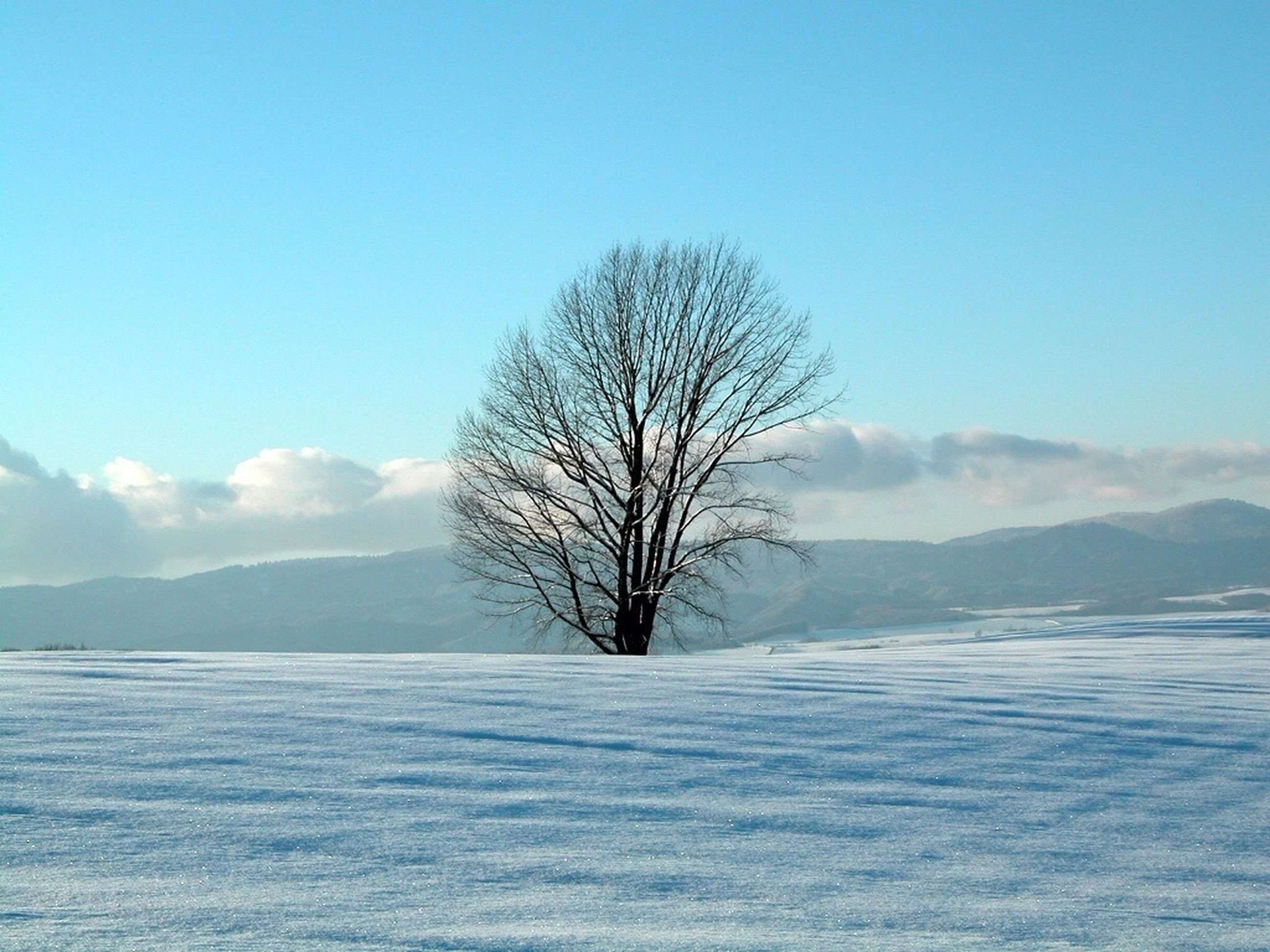 bare tree, tranquil scene, tranquility, snow, winter, cold temperature, scenics, beauty in nature, mountain, tree, nature, sky, landscape, blue, water, mountain range, season, clear sky, lake, branch