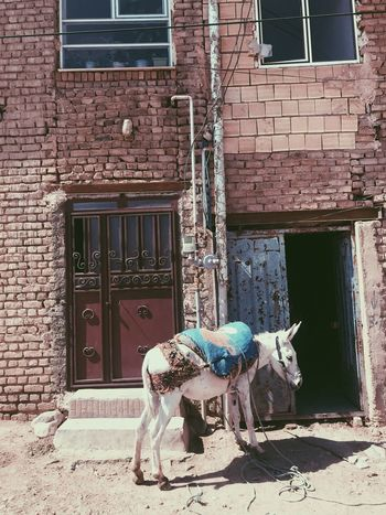 Donkey Architecture Building Exterior Built Structure Animal Mammal Animal Themes Domestic Animals