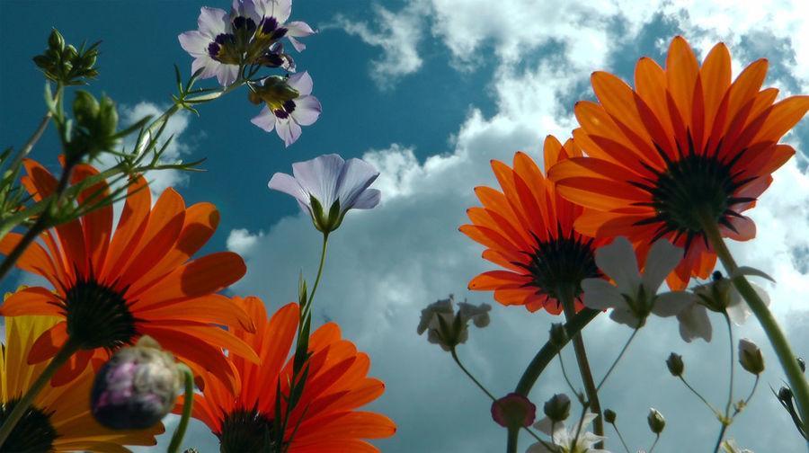 Close-up of orange flowering plants against sky