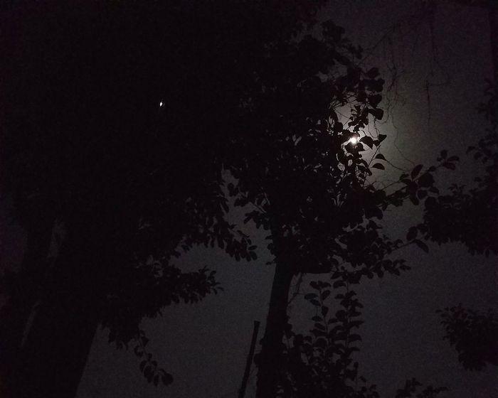 瞼越しに強い光を受け目覚め。窓を開け光と空気を全身で感じた午前4時。 2016.11.16 AM4:00 Night Noche 夜 Light Luz 光 Nature Naturaleza 自然 Moon Luna 月 月が綺麗ですね 夏目漱石 Japan Japon 日本 Kyusyu 九州 日常 Day Dia Two Days After Super Moon