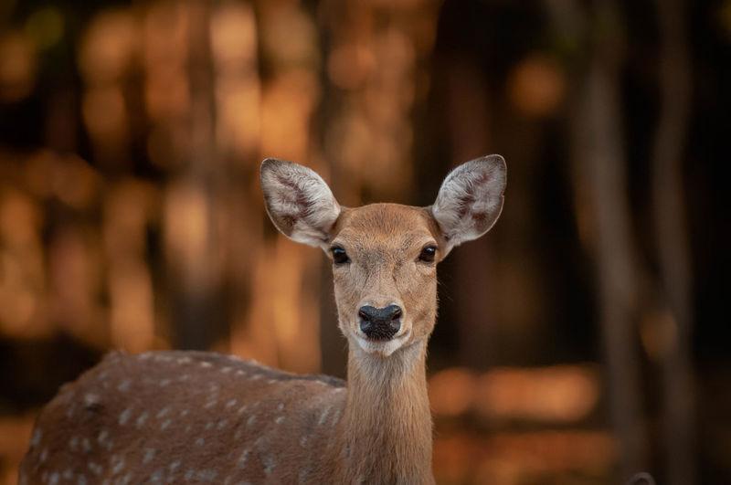 Portrait of deer at zoo