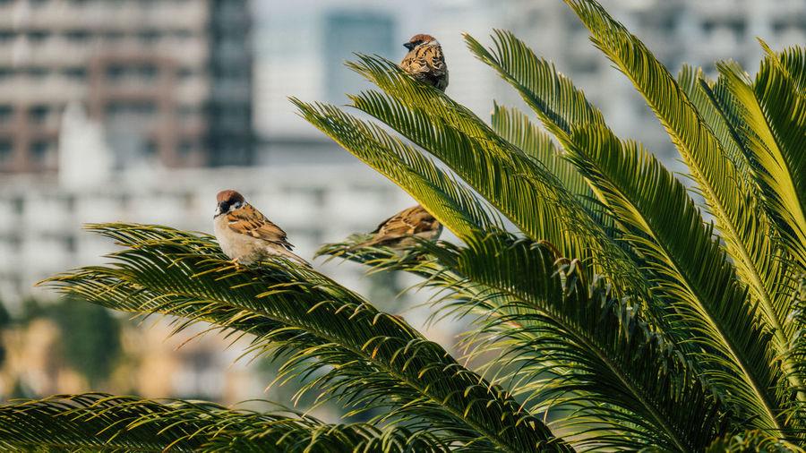 Day No People Odaiba Outdoors Birds Sparrows Japanese Bird Eurasian Tree Sparrow Tree Sparrow Suzume