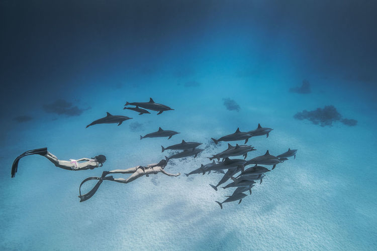 Women Snorkeling With Fishes Underwater