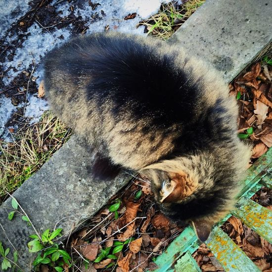 Furry cat Animal Animal Themes Animals Autumn Autumn Colors Cat Closeup Domestic Animals Domestic Cat Fauna Fluffy Furr Furry Ground Kitty Leafes Nature Persian Persian Cat  Pet Pet Photography  Portrait Sniffing Walking Yard