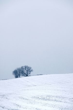 Winter Cold Temperature Snow Environment Tranquility Scenics - Nature Nature Tree Beauty In Nature Plant Tranquil Scene Land Landscape No People Frozen Field Day White Color Sky Outdoors