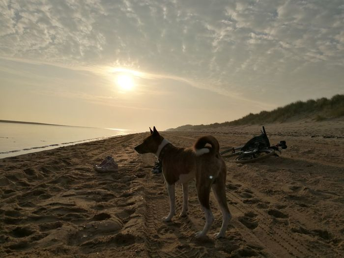 Love Yourself Basenji Sand Sunset Animal Sky Beauty In Nature Outdoors