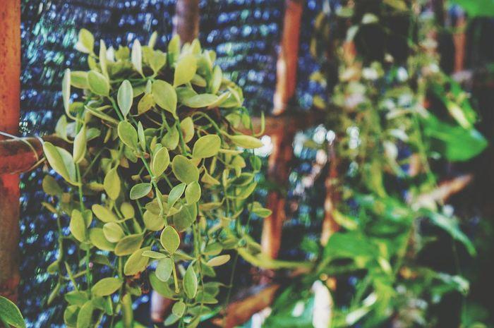 Greenery Learn & Shoot: Layering EyeEm Nature Lover Plants 🌱 SonyNex3 Mirrorless EyeEm 2015 Thailand_allshots Thailand
