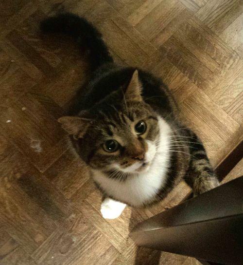 Catattude Worldscutestcat Cute Adorable