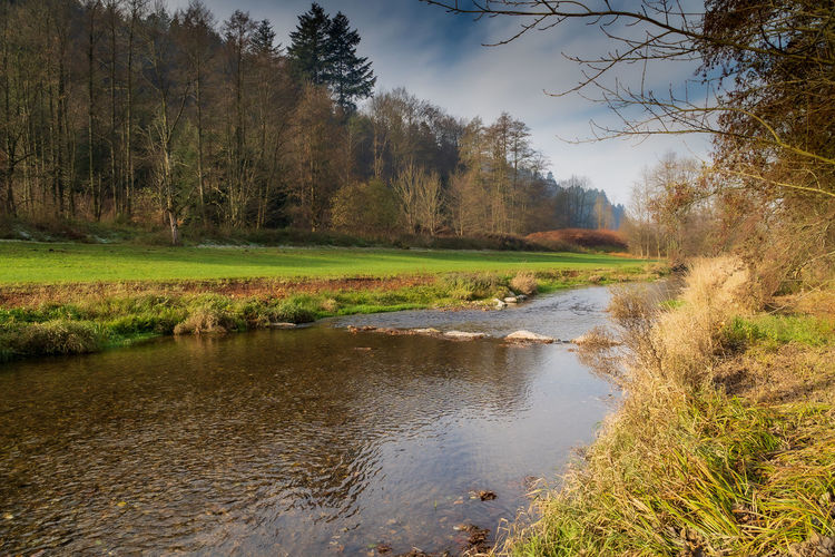 River streams with early morning fog in the forest of the beautiful Germany. Water Plant Tree Tranquility Tranquil Scene Scenics - Nature Beauty In Nature Nature No People Non-urban Scene Land Day Sky Growth Outdoors Trip Travel And Tourism Outdoor Photography Stream - Flowing Water Forest Fog Foggy Morning