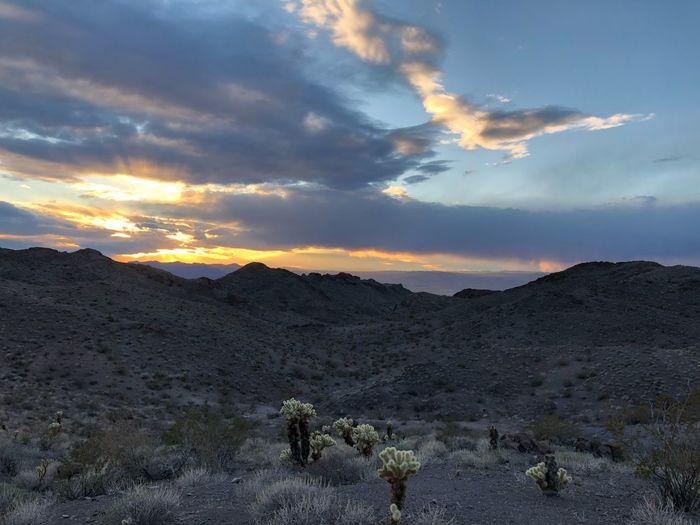 Peaceful Evening Twilight Cactus Sky Cloud - Sky Sunset Scenics - Nature Beauty In Nature Environment Tranquil Scene Landscape Nature Non-urban Scene Remote No People Idyllic Outdoors Plant Mountain Range Land Mountain