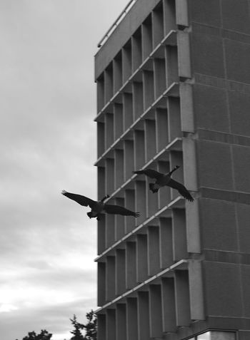 bird in flight Architecture Bird Building Building Exterior Built Structure Cloud - Sky Day Flight Low Angle View No People Outdoors Sky Sky And Clouds Staircase Steps And Staircases
