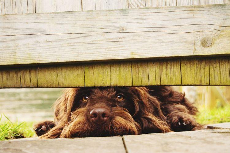 Close-up portrait of dog lying on wood
