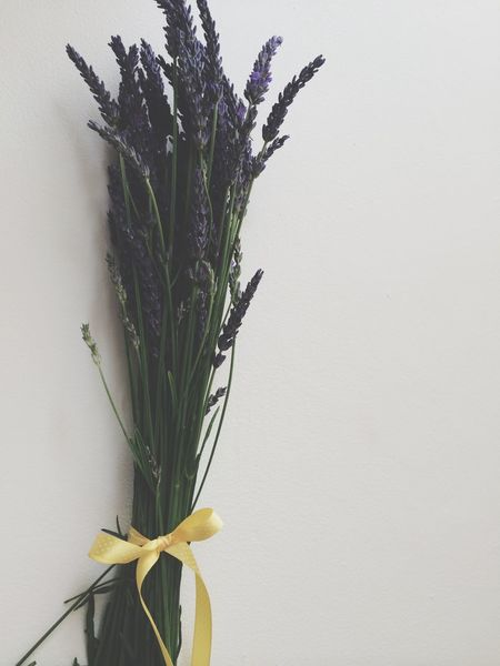 Lavender Flowerporn Flowers Flowers Yellow Bow