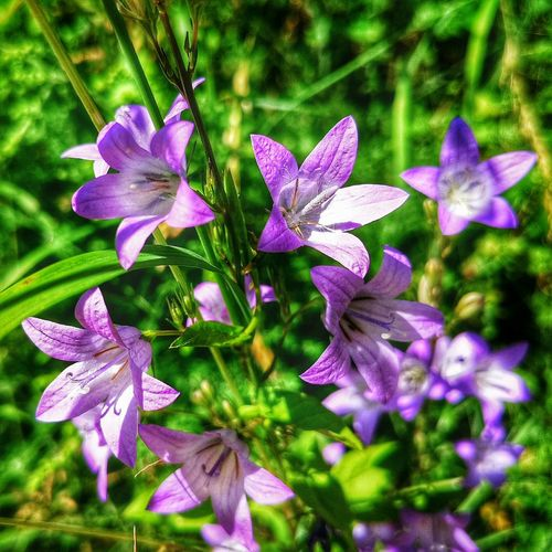 Getting closer... Flower Purple Freshness Nature Fragility Beauty In Nature Growth Petal Plant Close-up Focus On Foreground Flower Head Blooming No People Day Outdoors Germany Xiaomimi4c Xiaomiphotography Xiaomi Tranquility