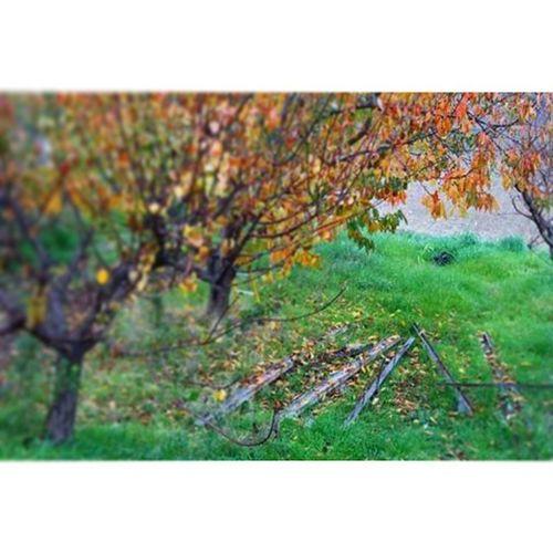 Albero Foglie Natura Paesaggio Autunno  PhotoByMe Photo Ph Images Nature Art Artistic Contrasto Luce