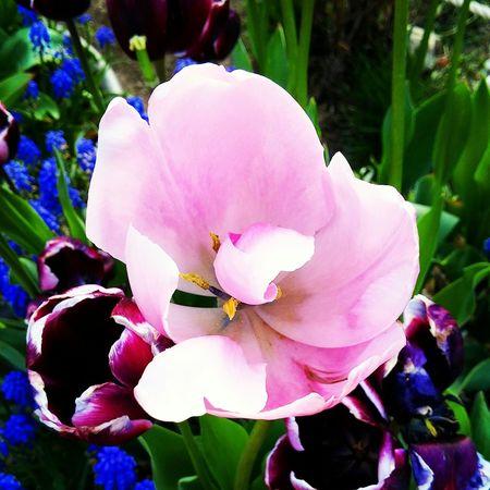 Flower Gpro2 Daliy 봄 일상 꽃 Yeah Springtime! Snap Spring