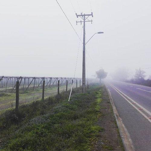 Salida en bici Enbiciando Paisaje Neblina Mañana Frio Deporte Salida Uplandbike Instanature Instatalca Instachile Chilegram