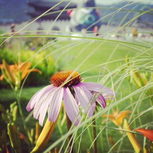 Seoul 2017 Seoul, Korea Flower Fragility Focus On Foreground Nature No People Close-up Growth Petal Flower Head Beauty In Nature Outdoors Blooming
