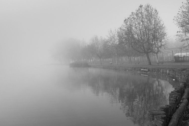 Acp AlessandroCappello Blackandwhite Bw Calm Foam Gavirate Lake Landscape Nature Nebbia Outdoors Power In Nature Reflection Reflex River Tranquil Scene Tranquility Tree Varese Water Lost In The Landscape