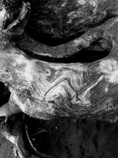Nature Photography Textures And Surfaces Inside Driftwood Shapes In Nature  Abstractions Driftwood Nature Black & White Abstract Nature Still Life Black And White