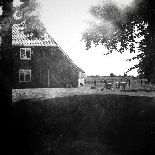 Dutch farming. Streetphotography IPhone Photography AMPt_community NEM Submissions Iphoneonly Blackandwhite NEM Black&white EyeEm Best Shots - Black + White Black And White Scenery Shots