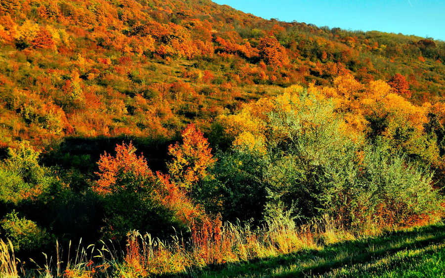 Side of hill Ziribar in autumn Autumn Beauty In Nature Brown Change Day Flora Forest Growth Landscape Mountain Nature No People Outdoors Pilis Pilisszántó Scenics Sky Sunset Tranquility Tree Vegetation