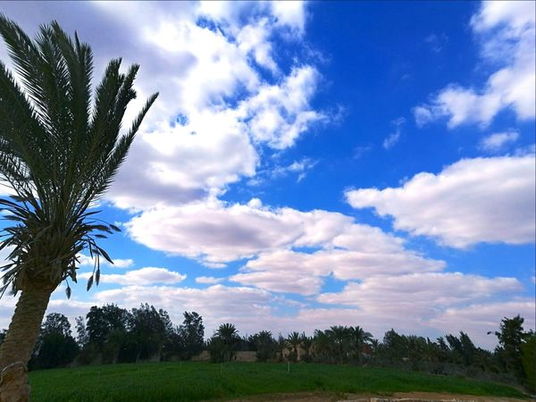 Tree Cloud - Sky Nature Blue Sky No People Day Grass Outdoors Beauty In Nature Freshness Sky And City The Street Photographer - 2017 EyeEm Awards The Great Outdoors - 2017 EyeEm Awards EyeEmNewHere Place Of Heart Naturephotography Beauty In Nature Live For The Story Nature Clouds & Sky Clouds And Trees EyeEm Selects