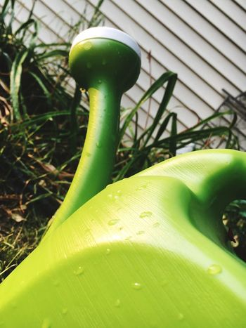 Green Color Growth No People Plant Close-up Outdoors Day Nature Leaf Focus On Foreground Freshness Watering Can