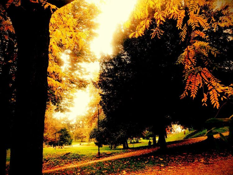 beautiful autumn 🍁 Leaves Leaf Autumn Autumn colors Autumn Leaves Autumn🍁🍁🍁 Autumn Collection October 2018 2018 EyeEm Park Italy Tree Sunlight Silhouette Sky Close-up Forest Fire