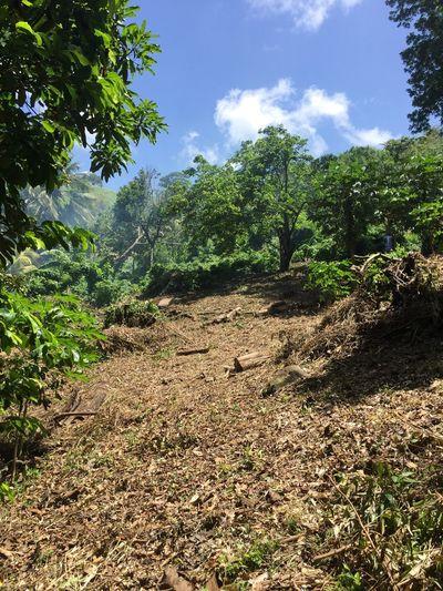 Jungle day Jardin Underwood Oklm Foutsabel Antchiépéyiya Martinique
