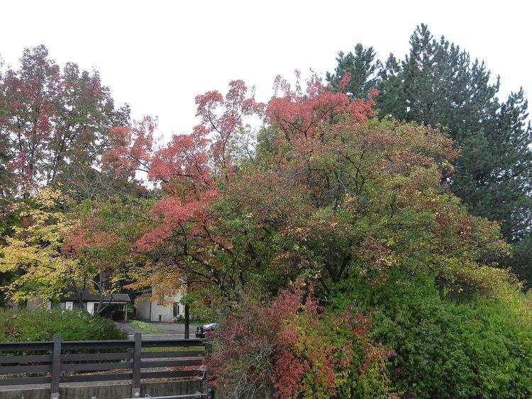 Walking Around Taking Photos Holidays Fall Colors Fall Beauty