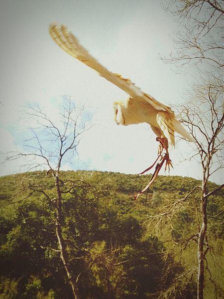 Owl Sky Birds In Flight Trees Relaxing Enjoying The Sun Taking Photos