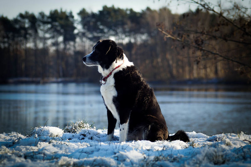 Dog sitting on lake during winter