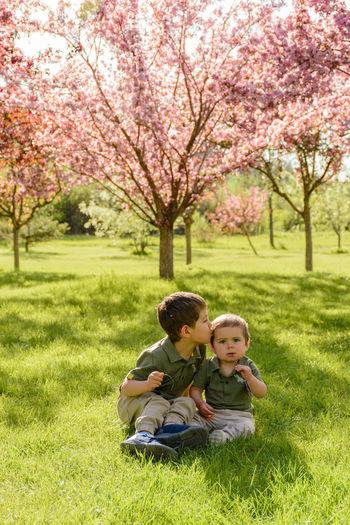 Full length of boy sitting on cherry tree in park