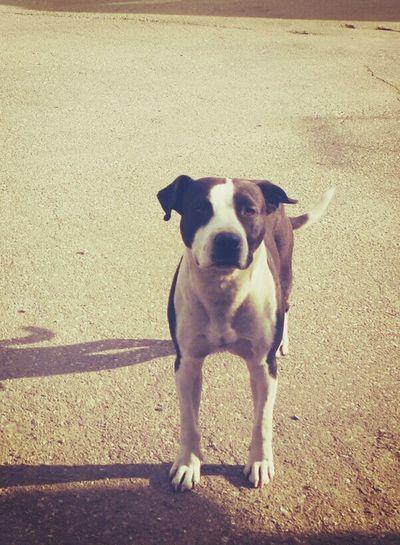 Cat Mewmew xD Lovepet♥ :) <3 Sweetdog Milojko. :) Dog Life Dog❤ Doglife My Dog <3 Sweet♡ Cute Dog