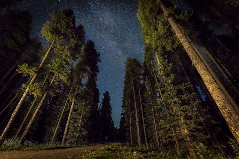 Very dark forest can be very scary, but it makes the night sky feel even more beautiful. I saw the milky way for the first time in my life in July in Northern California, then a week after that, I shot it in Banff Canada. It was magical Banff National Park  Astronomy Beauty In Nature Canada Forest Galaxy Landscape Low Angle View Milky Way Nature Night No People Outdoors Scenics Sky Star - Space Tranquil Scene Tranquility Tree Breathing Space