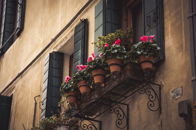 Low angle view of flower pots on window