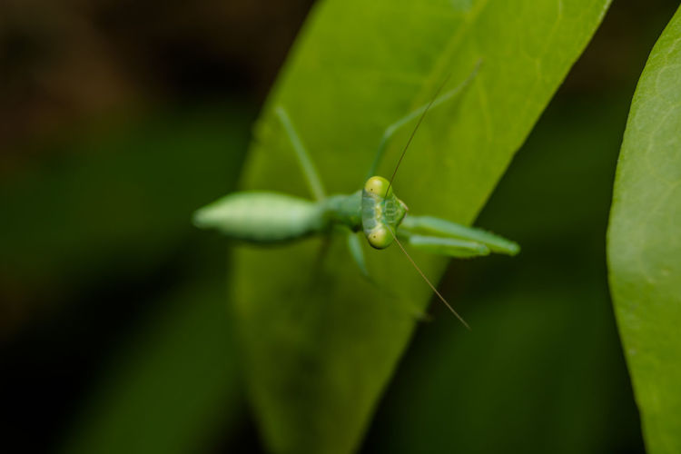 Green Color Plant Part Invertebrate Animal Animal Themes Leaf One Animal Animals In The Wild Insect Close-up Animal Wildlife Plant Growth Selective Focus No People Nature Day Zoology Focus On Foreground Beauty In Nature Outdoors